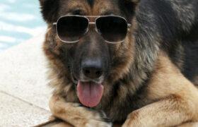 سگ اینقدر پولدار دیده بودین ؟